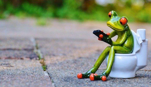 grenouille sur des toilettes